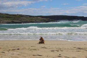 Cute dog at Barleycove Beach