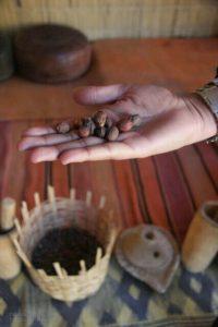 Argan seeds, Morocco