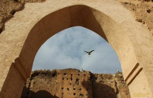 Black storks at El Badi Palace, Morocco